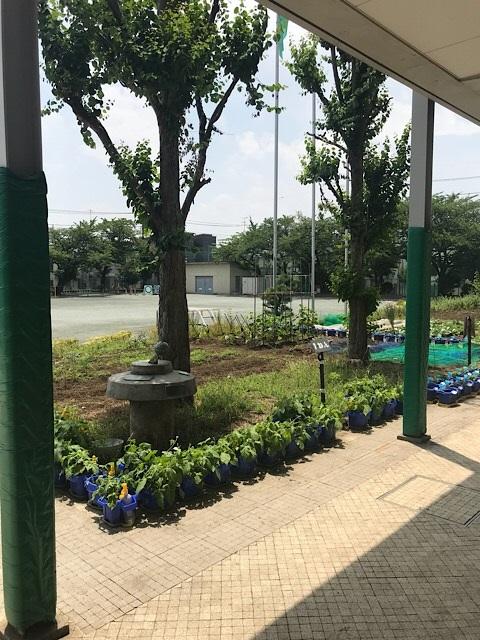 緑ヶ丘小学校 校庭の眺め