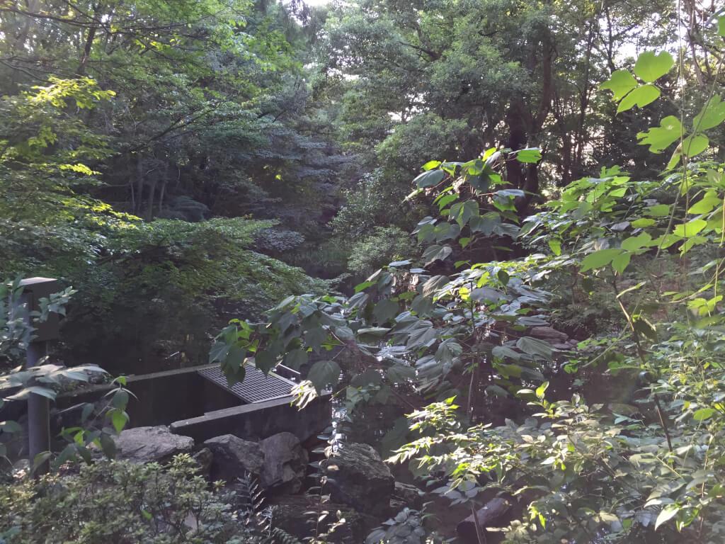 駒場野公園 ビオトーク池