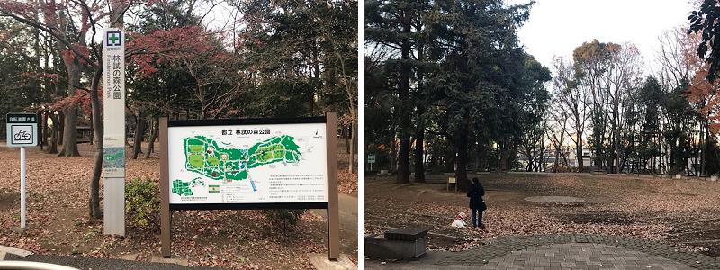 品川区 林試の森公園